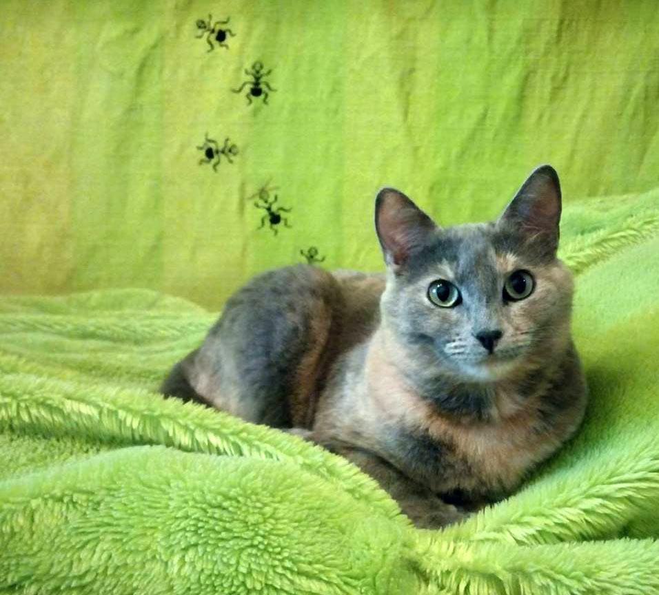 Кошка Фиби. Люблю эту фотографию