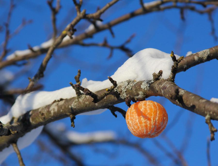 А вам с мандаринами везет?