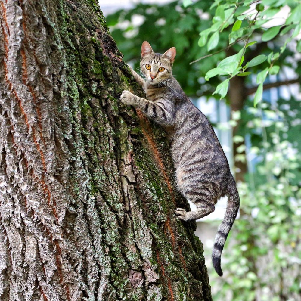Котики по средам. Кот на дереве