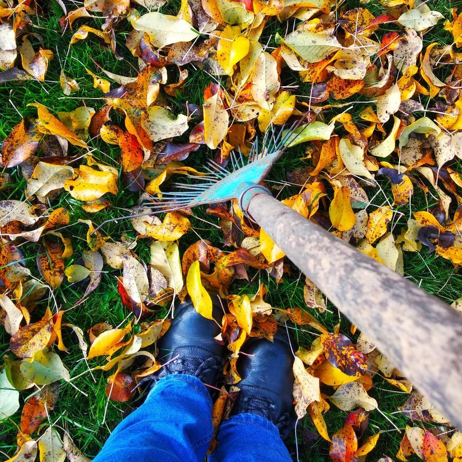 Убирать листья или не убирать? 🍂🍂⠀