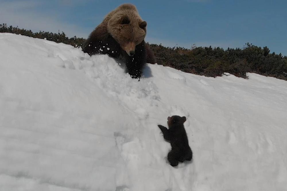 Терпеливая мама-медведица. Стоит ли брать с нее пример?