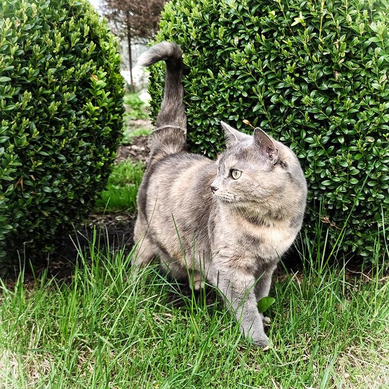 Кошка Фиби