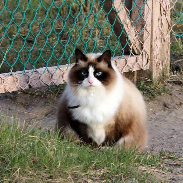 Суровый карельский кот