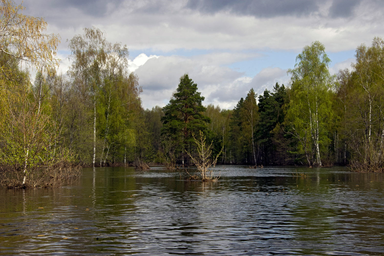 Река Поля (приток Клязьмы). Разлив