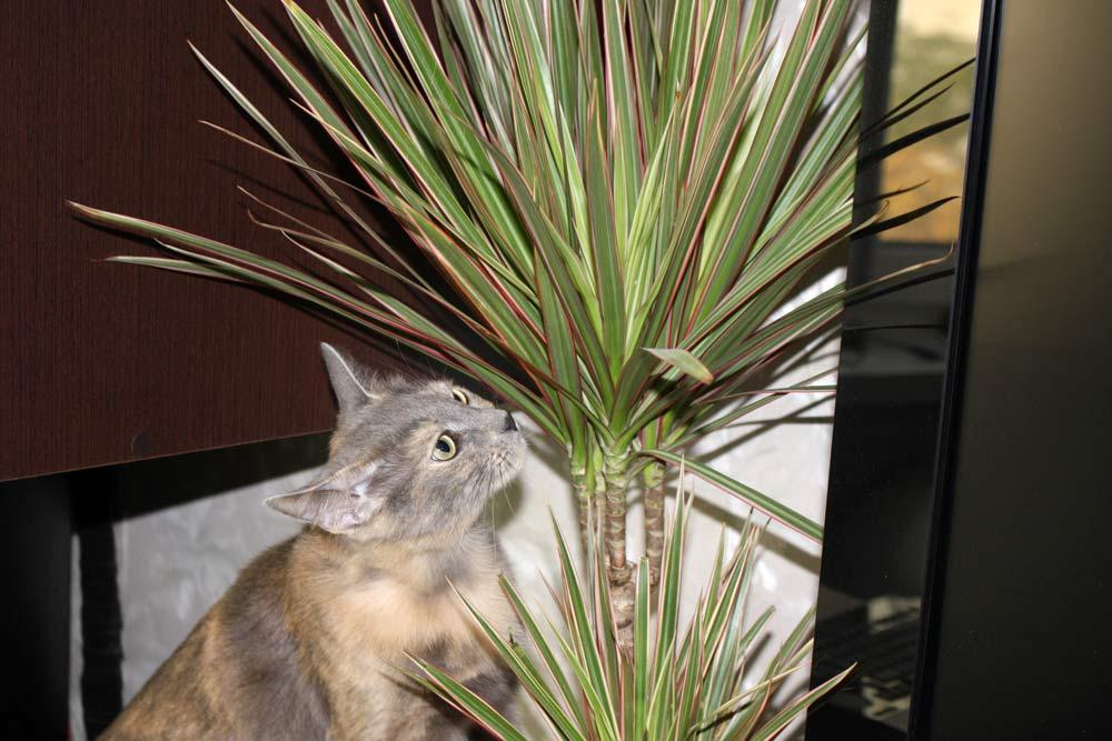 Кошка - гроза комнатных растений