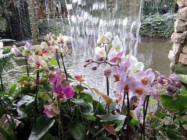 орхидеи-1