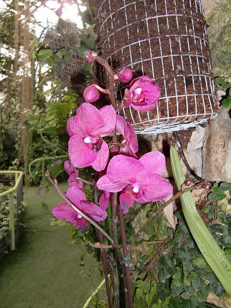 орхидеи-4