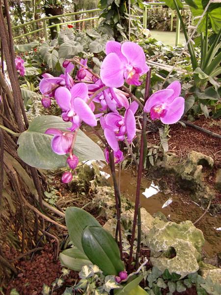 орхидеи-6