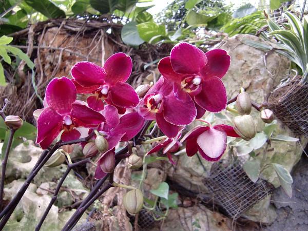 орхидеи-10