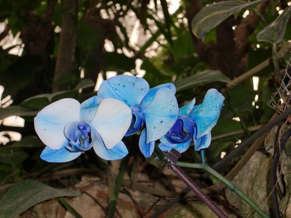 орхидеи-11