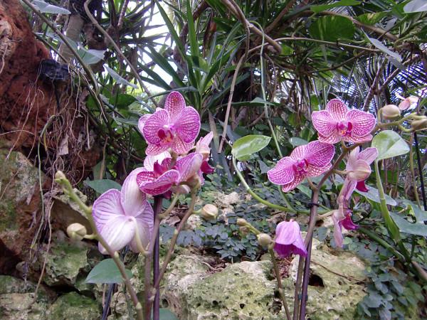 орхидеи-12