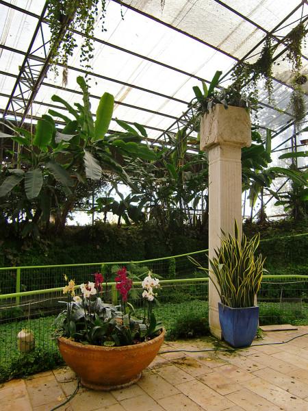 орхидеи-13