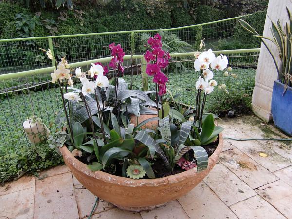 орхидеи-14