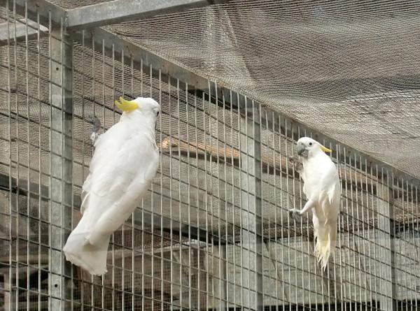 птицы-3