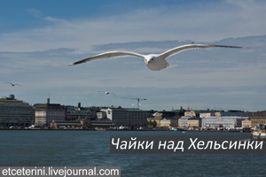 Helsinki-Seagulls.jpg