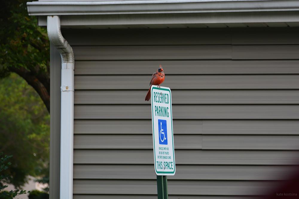 ill cardinal