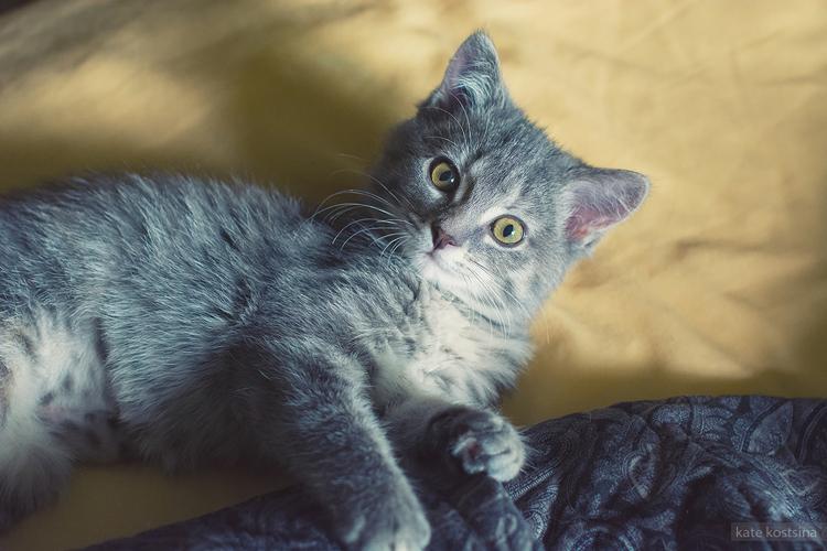 kate kostsina cats (5)