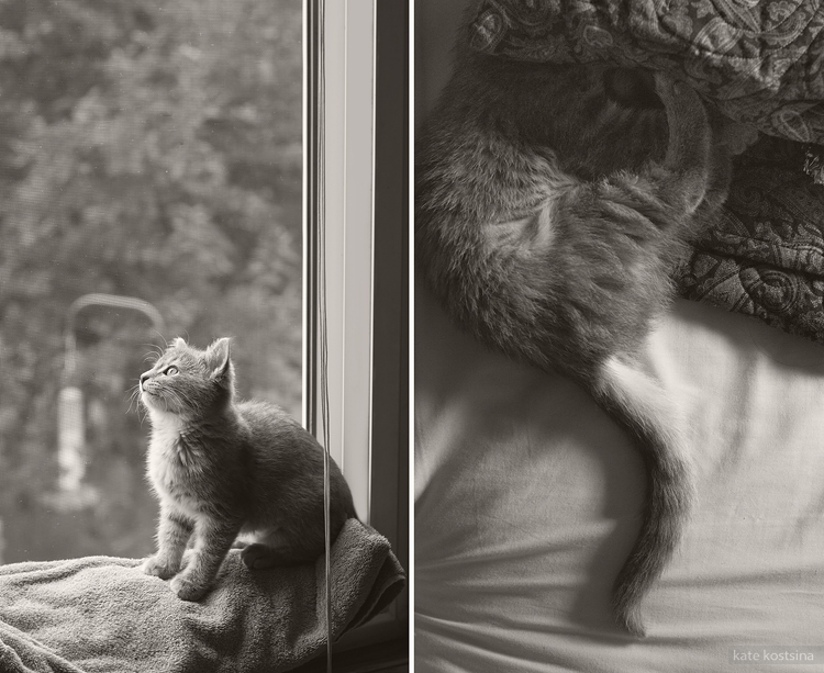 kate kostsina cats (4)