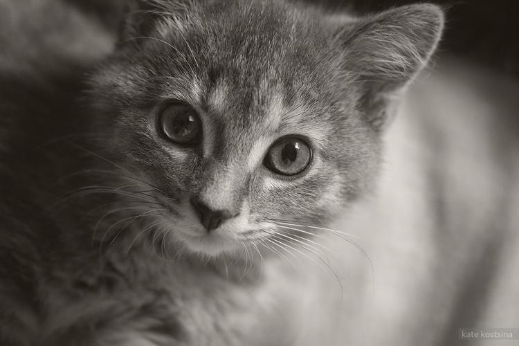 kate kostsina cats (3)