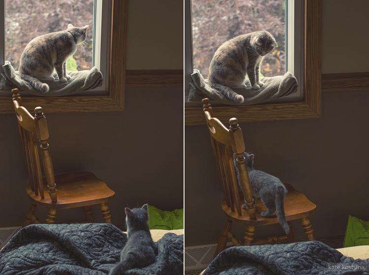 kate kostsina cats (8)