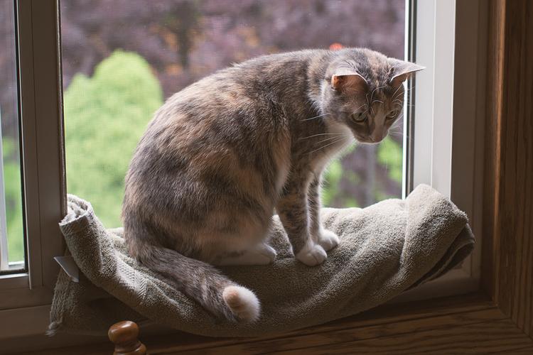 kate kostsina cats (7)