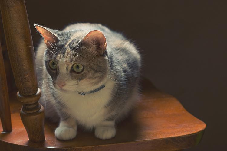 kate kostsina cats (9)