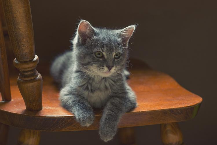 kate kostsina cats (6)