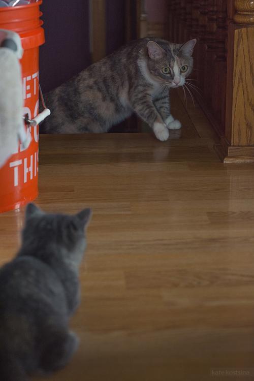 kate kostsina cats (10)