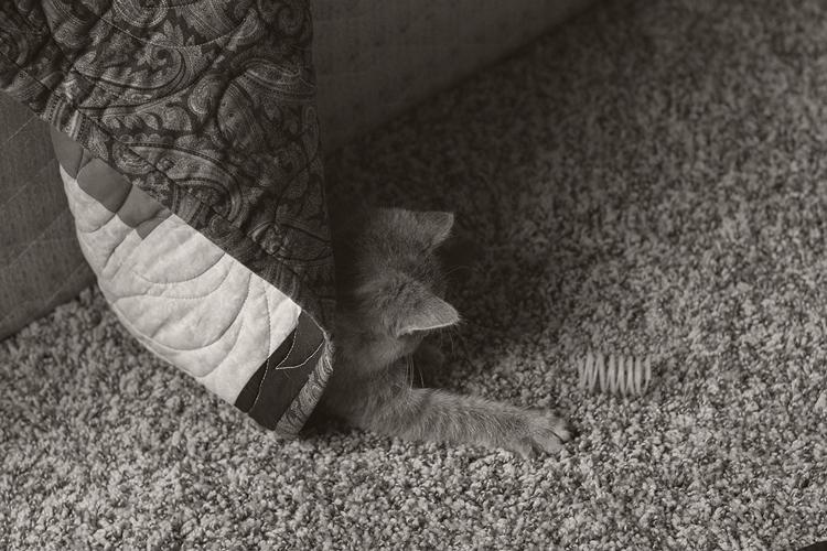 kate kostsina cats (2)