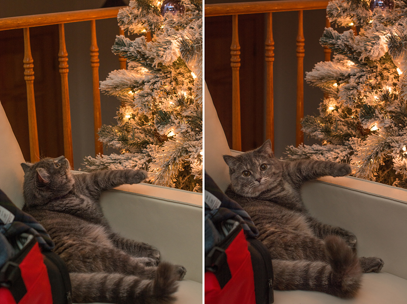 kate kostsina christmas (1)