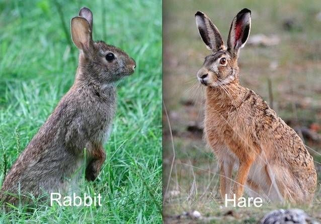 3rabbit-versus-hare.jpg.638x0_q80_crop-smart