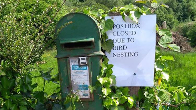 Irish-Postbox-Sally-ODowd