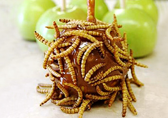 201106-fair-mealworm-caramal-apple-ss