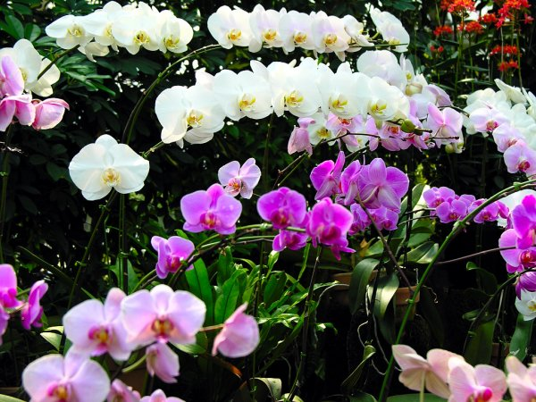 1186196246_orchid007