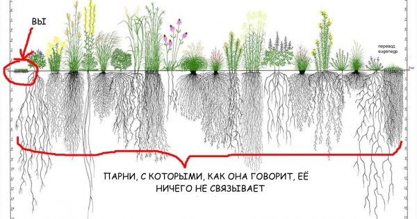 rootsystems