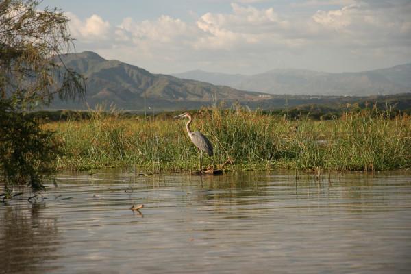 Крокодилы и бегемоты в Эфиопии