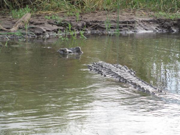 Крокодилы в Эфиопии