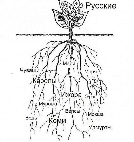 Древо «русских»