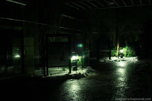Finskii zoopark