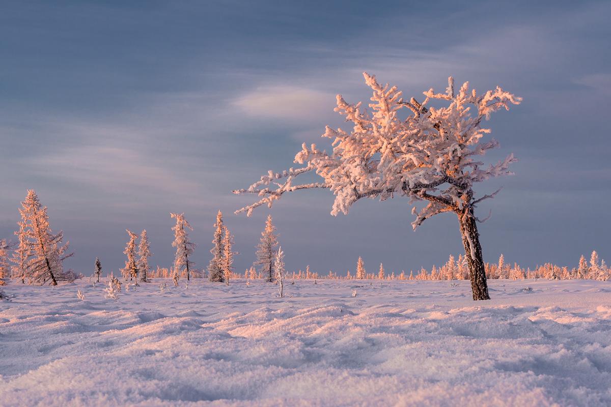 ещё картинки к суровой зиме тундры сыном читали