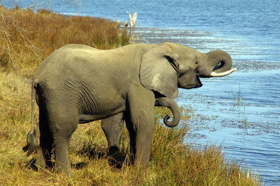 Слоны в Имире