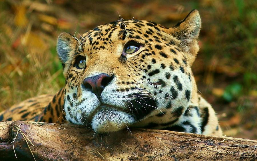 moody_tiger-wide