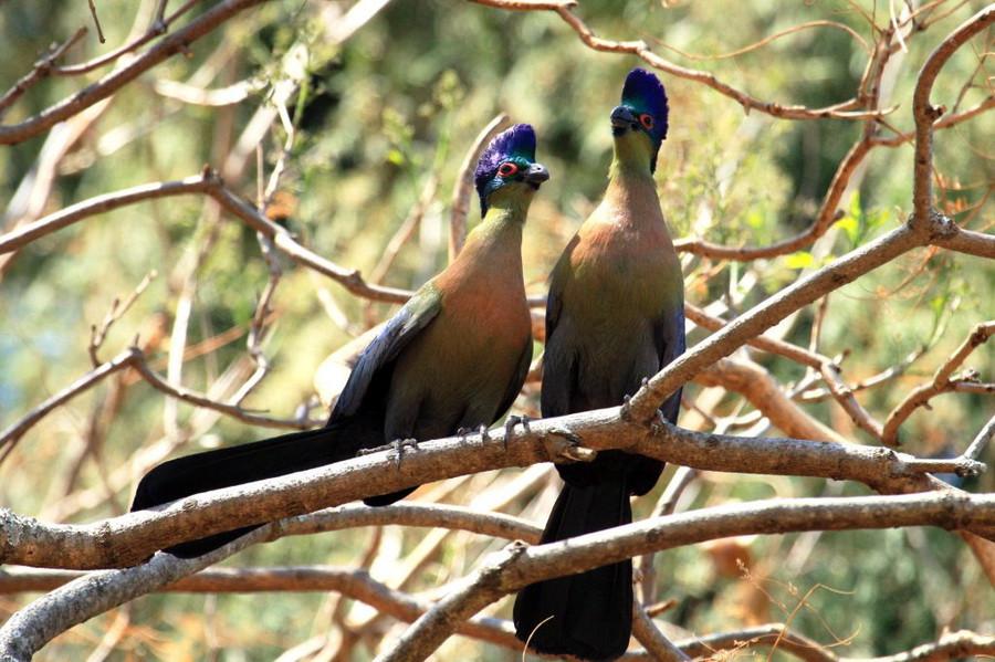 птицы 460