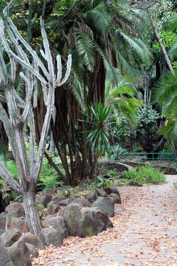 Африканский парк осенью - окончание IMG_0455