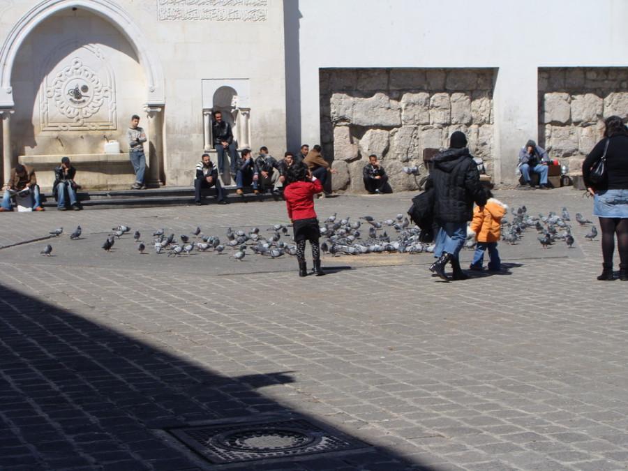 Сирия март 2009 г 093