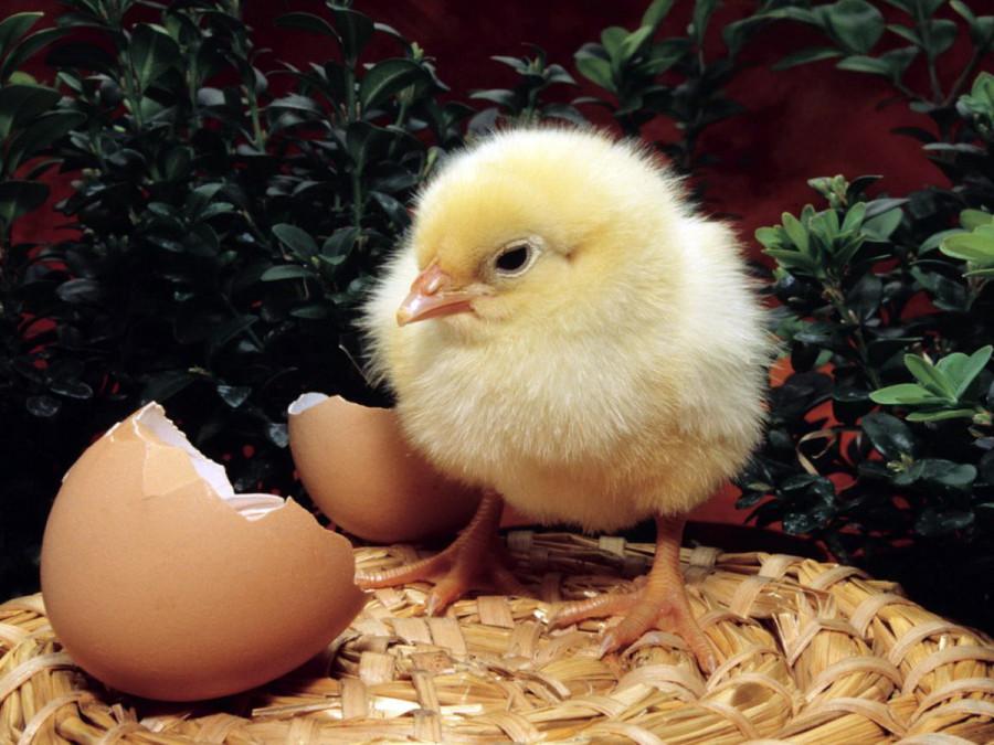 easter-eggs_1152x864_72880