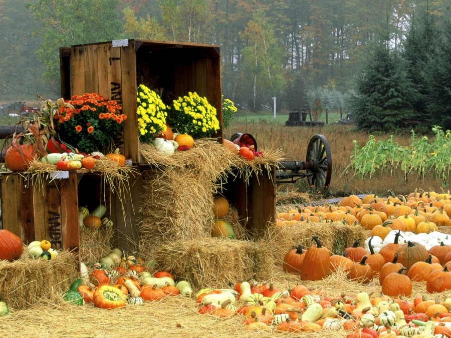 Autumn-Time-in-Nature-008