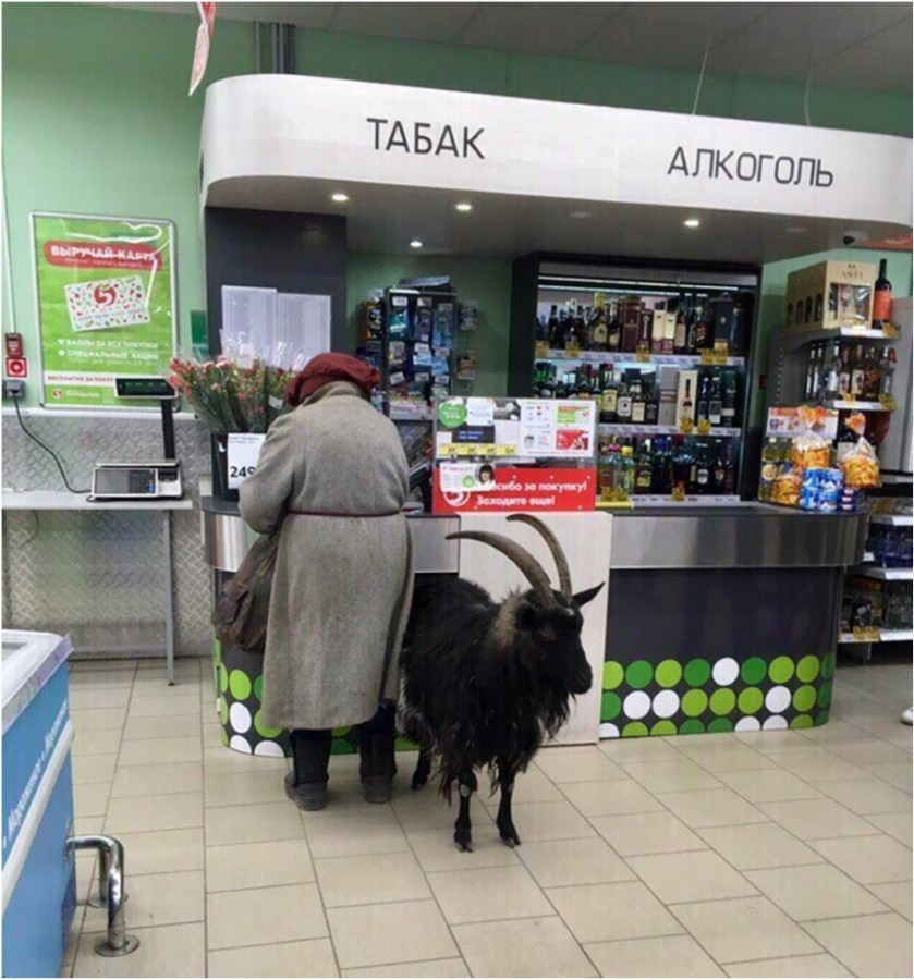 А он взял да и напился И в козла вот превратился.