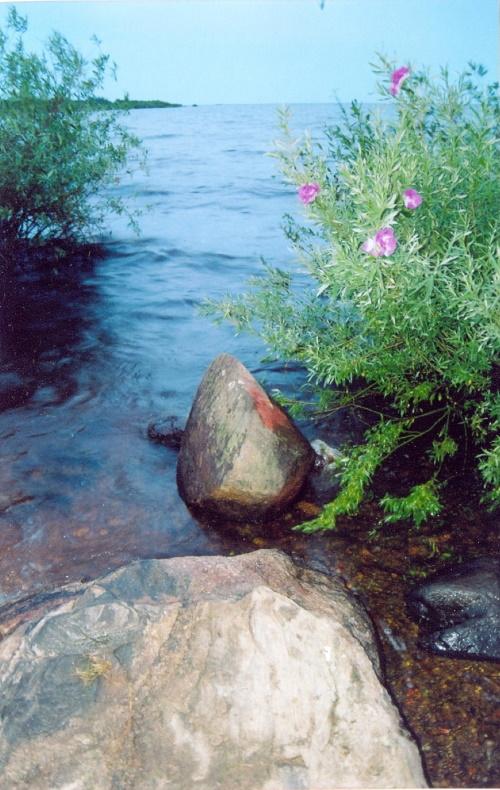 Берег Рыбинского рукотворного моря, 6  июля 2005 года