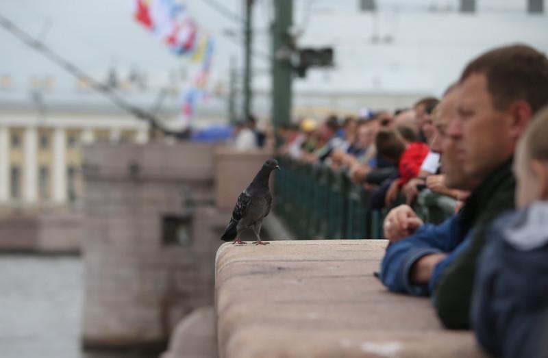 """""""Что стоим? Кого ждём"""" интересуется голубь, и невдомёк ему, что все смотрят на парад кораблей ВМФ 30 июля 2017 года"""